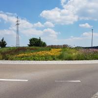 Staudenmischbepflanzung Kreisverkehr am Kuglhof in Pfaffenhofen